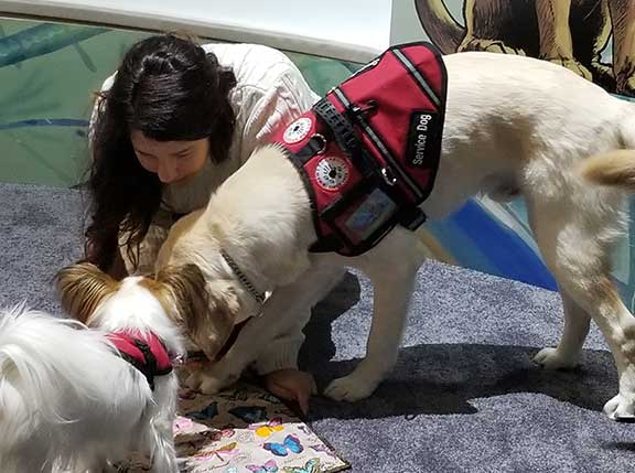 Seizure support dogs on display