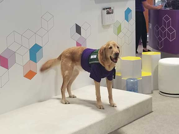 Epilepsy support dog working at the exhibits