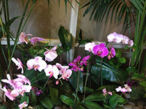 Orchids at epilepsy conference